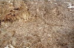 foto mertvie-koralli