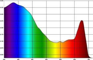 grafik pogloscheniya sveta zooksantellami