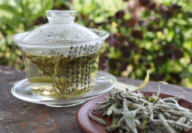 история белого чая