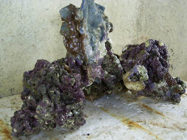 настоящий живой рифовый камень