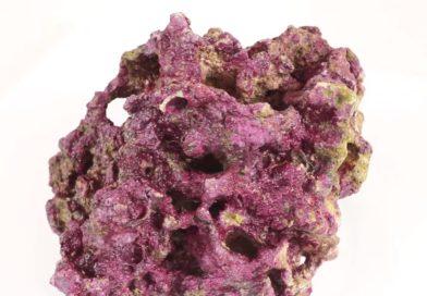 оживленный рифовый камень