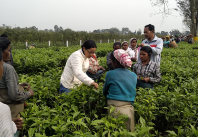 назначение Манджу Баруа руководителем Hilika Tea Estate
