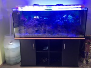 foto morskoy akvarium 450 litrov