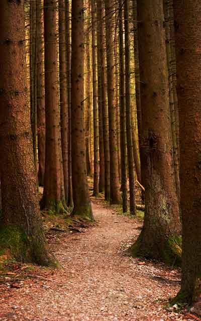 foto sosnoviy les